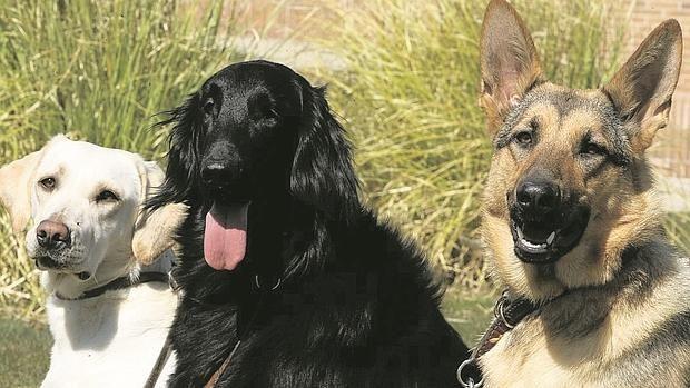 El hombre domesticó a los primeros perros hace 33.000 años en el sureste de Asia