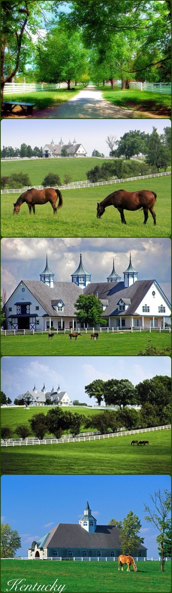 17 Best Images About Kentucky Horse Farms And Stables On