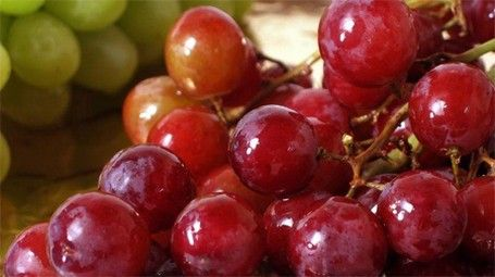 Almost all the annual quantities of grapes handled by the company, comes from the region Pieria. The main varieties are Crimson Seedless, Autumn Royal Seedless, Black Magic and Sublima Seedless.  The bulk of production is absorbed by the Great Britain, Bulgarian and Romanian markets.