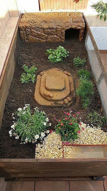 Pin di sara d 39 erasmo su tartarughe di terra for Stagno artificiale per tartarughe