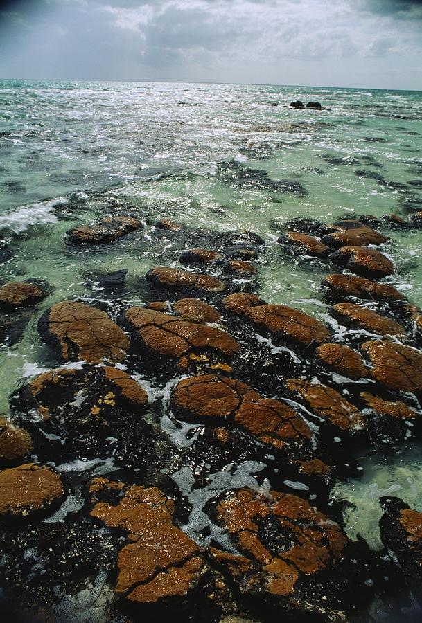 * Ancient stromatolite reefs still flourish in high saline Shark Bay - Australia