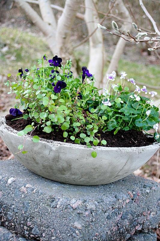 Betongkruka av gammal wokpanna - Lindas trädgårdsblogg