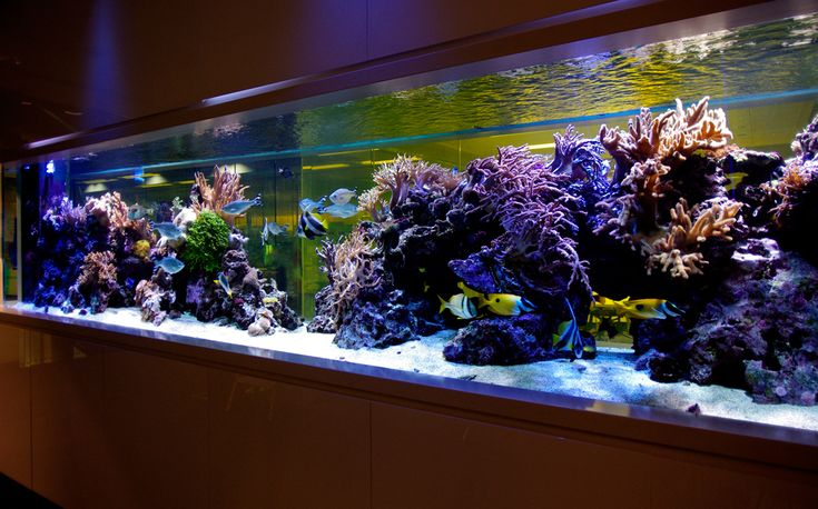 Marine Aquarium Design photo  design aquarium  Pinterest  Photos, Aquarium -> Aquarium Design Mural