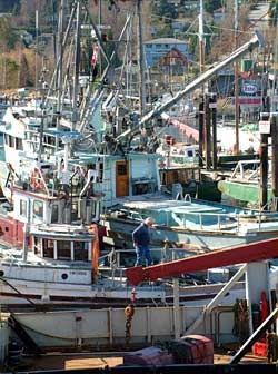 Gibsons Marina - Gibsons Landing rings a working harbour; commercial fishermen, Coast Guard, tour boats, water taxis and leisure craft fill the piers for a great weekend stroll - and you can buy fresh fish right off the dock.