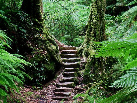 Rainforest Steps |the Grand Canyon bushwalk in the heritage listed Blue Mountains National Park near Blackheath, NSW, Australia.