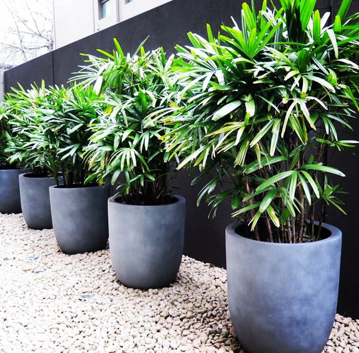 Boutique Apartment Landscaping - South Yarra