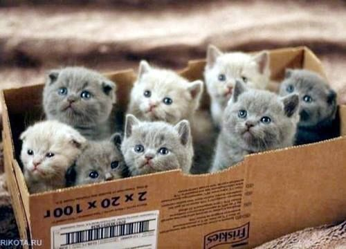 We Heart It の catsss | via Facebook - http://weheartit.com/entry/82061194
