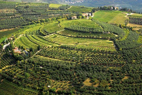 Valpolicella    http://www.agriturismo.st/it/italia/Strada-del-Valpolicella/