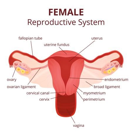 the 25+ best female reproductive system ideas on pinterest, Human Body