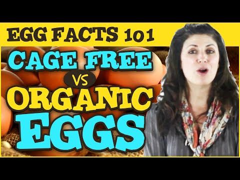 Egg Facts 101: What is the difference between Cage Free, Organic, and Omega 3 eggs by Gemperle Farms - YouTube