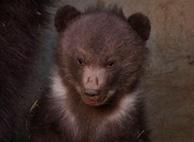 Nachwuchs im BärenPark