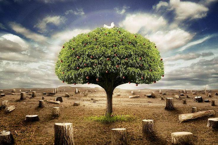 Fakta Bumi Tanpa Pohon dan Dampaknya Bagi Kehidupan | Kepoan.com - Membicarakan fakta bumi tanpa pohon memang terdengar mengerikan. Akan tetapi...