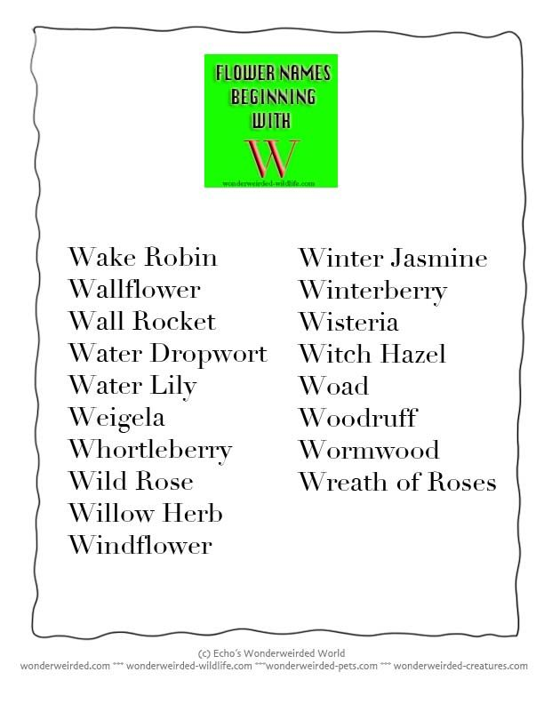 Flower Names That Start With Letter M Best Flowers And