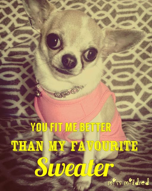 My Beautiful Chihuahua Miss Mildred, just look at them eyes xx