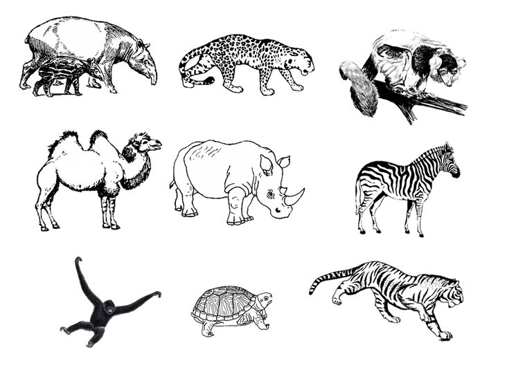 zoo drawing animal drawings animals visit google draw different function activity preschool activities project species pets