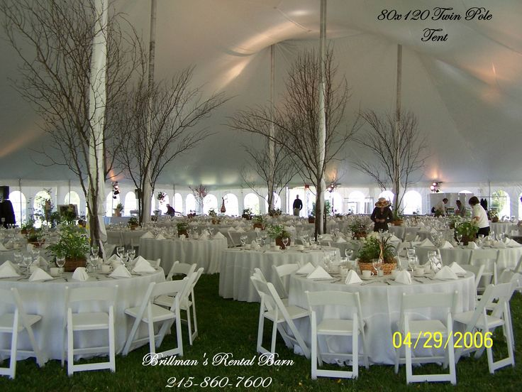 Tree branches around the tent poles. | Tented & Outdoor