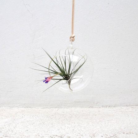 vaso bola pendente - Domo Airplants