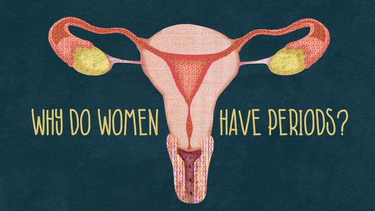 View full lesson: http://ed.ted.com/lessons/why-do-women-have-periods A handful of species on Earth share a seemingly mysterious trait: a menstrual cycle. We...