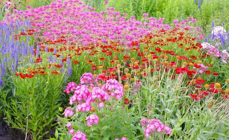 Indianernessel: Eleganter Sommerblüher -  Die Indianernessel hat viele Talente: Ob als Schnittblume, winterharte Staude oder Duft-, Tee-, Würz- und Heilpflanze – sie macht immer eine gute Figur.