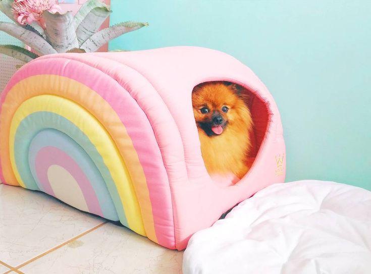 Casinha de cachorro em formato de arco iris.  Woof pet brasil    Pet rainbow house    Sushi, spitz alemão, lulu da pomerância, pomeranian do @mathdoblog  www.blogdomath.com.br    Instagram @catiorineosushi    Usou? Dê os créditos!  Vamos fazer da internet um lugar melhor!
