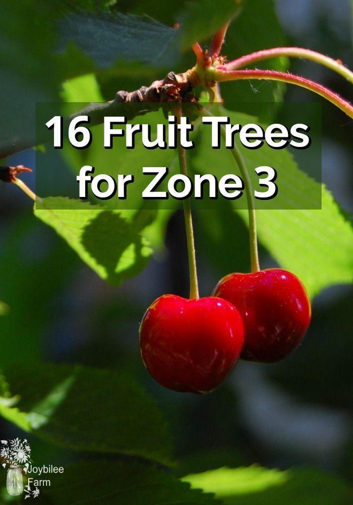 16 Fruit Trees For Zone 3 Joybilee Farm Diy Herbs Gardening Fruit Trees Fruit Zone 3
