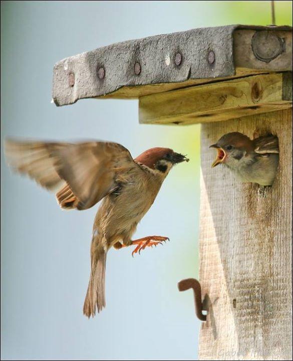 71 best images about nichoirs pour oiseaux du jardin for Jardin 4 moineaux