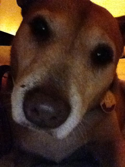 Dingo selfie!!!