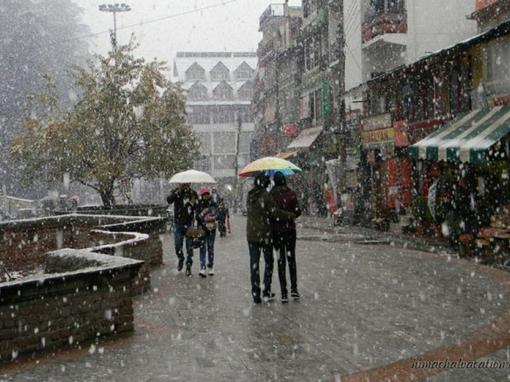 Snow Fall in Shimla