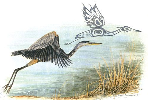 Heron in Flight- Sue Coleman