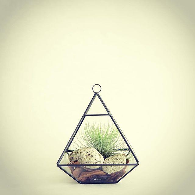 【qfp.jp】さんのInstagramをピンしています。 《#テラリウム#植物 #plants #インテリア #インテリア雑貨 #interior #instagood #airplants#エアプランツ#tillandsia#チランジア#tbt #l4l #followme #cactus #サボテン#design #デザイン#love #happy #smile #おしゃれ #gift #ギフト #店舗什器 #観葉植物 #qfp》