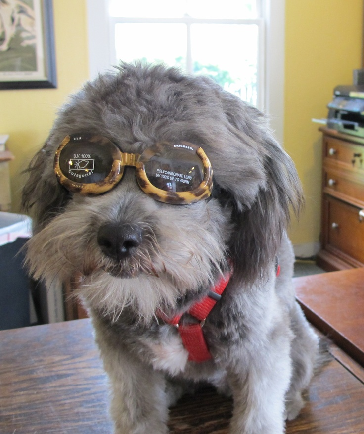 Archie keepin' it cool at Five Gables Inn & Spa