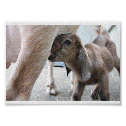 Goat Baby Animal Poster Nursing Feeding - nursing nurse nurses medical diy cyo personalize gift idea