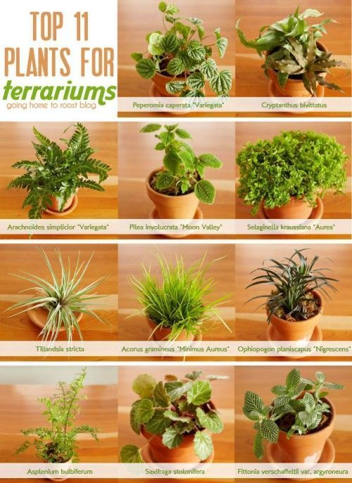 Exemples de plantes idéales pour la réalisation d'un terrarium maison ! / Source : pinterest