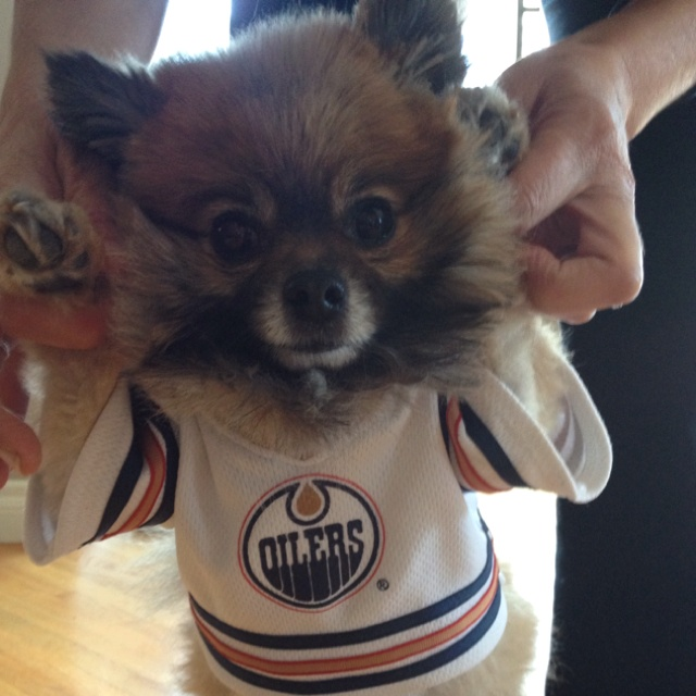 Oilers Puppy