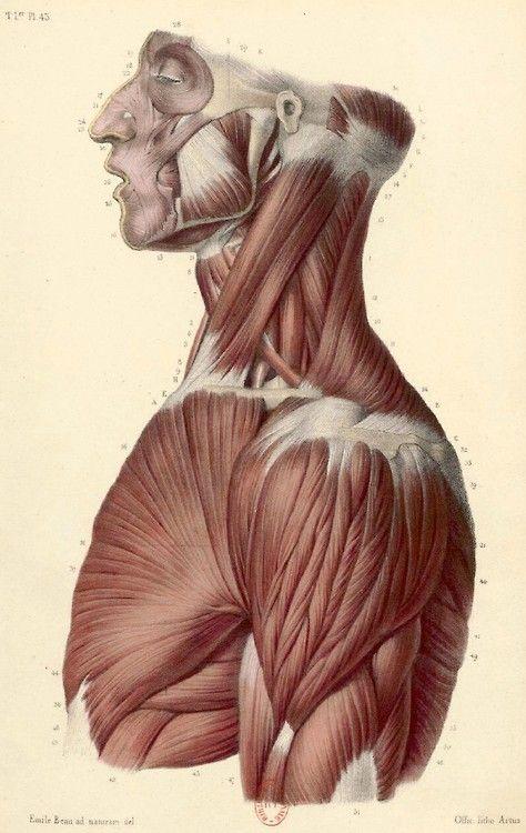 Atlas de Anatomia Descriptiva del Cuerpo Humano. Bonamy. 1ª Parte año 1844, 82 grabados a color.