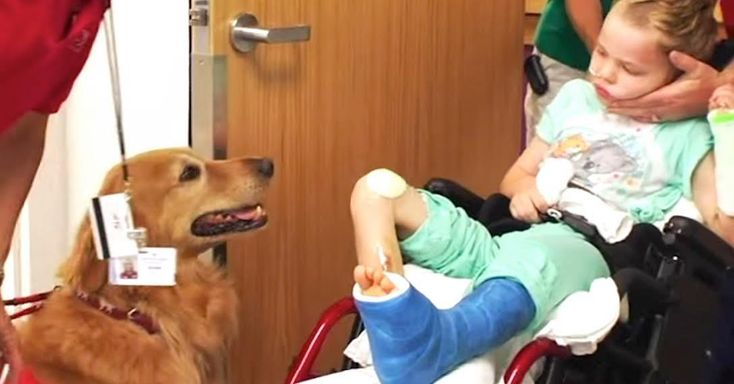 They Introduce Their 'Lifeless' Son To A Dog. When THIS Happens I'm In Tears!  Caleb Howard was 6-years young when a head-on car accident left him with a traumatic brain injury and numerous broken bones.