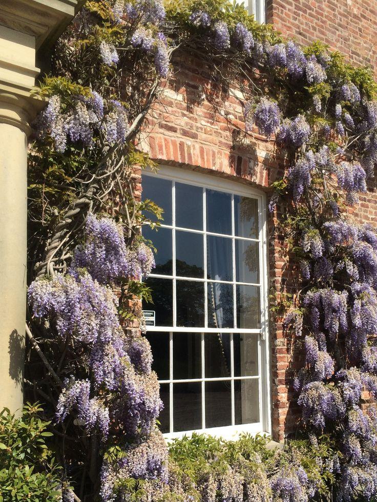 Purple wysteria framing our Georgian window at Bryngwyn Hall