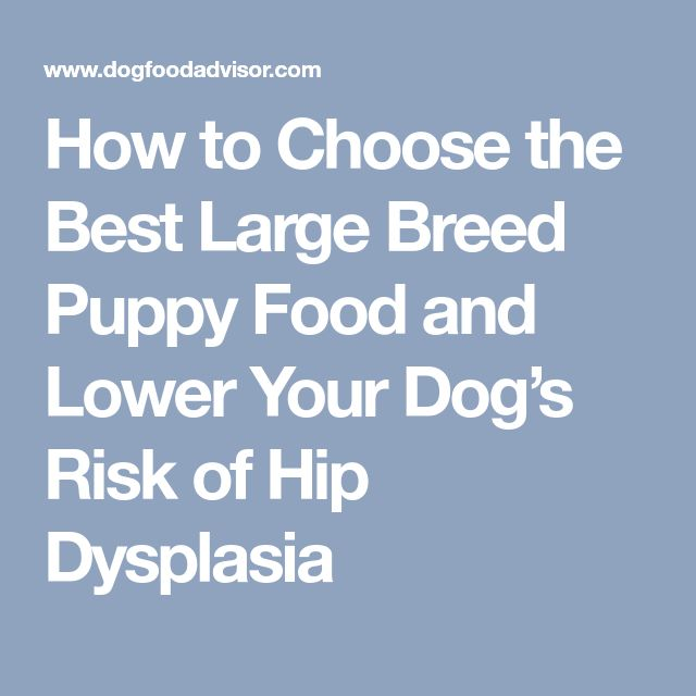 How to Choose the Best Large Breed Puppy Food and Lower Your Dog's Risk of Hip Dysplasia