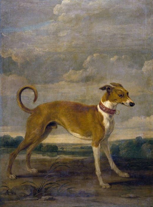 """""""Un perro"""", Paul de Vos. Óleo sobre lienzo, siglo XVII"""