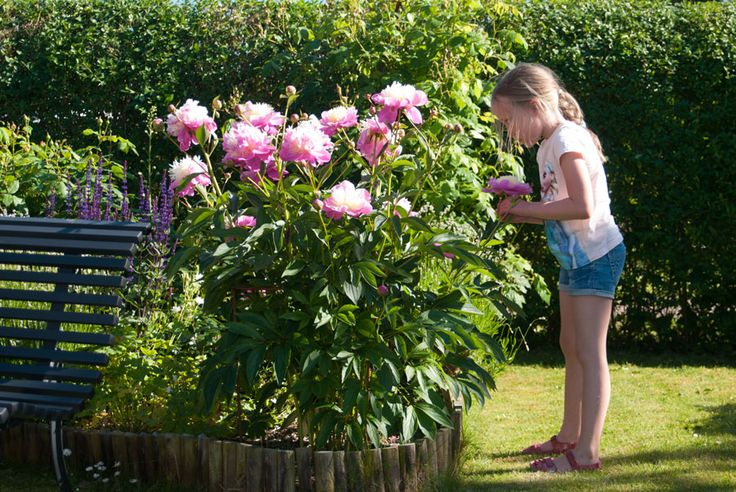"""Fermob bench """"Louisiana"""", peony and my daughther"""