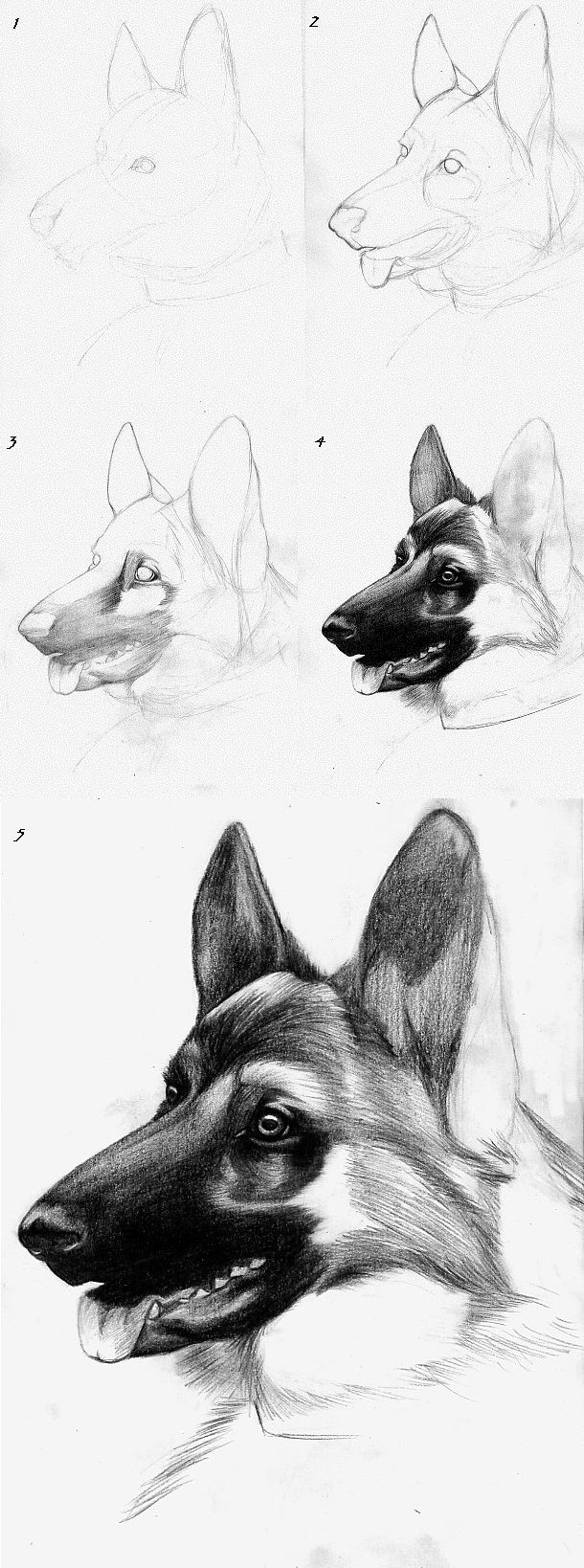 Canine Drawing Tutorial - GS by roseofaurora.deviantart.com on @deviantART