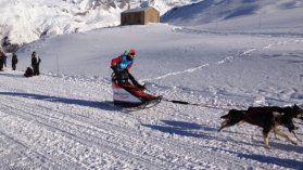 Bourgogne : La Grande Odyssée : notre feuilleton de la semaine vous fait découvrir la course mythique de chiens de traîneau