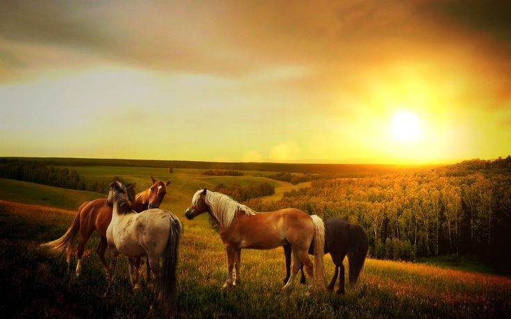 Download                  Description      Resolutions        Download Horses With Sunset wallpaper from the above display resolutions for...