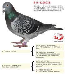 """Képtalálat a következőre: """"jos cools pigeons"""""""