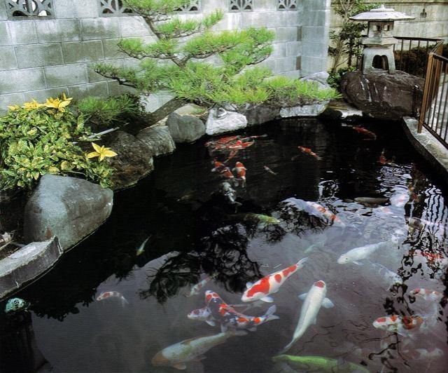 508 best koi pond images on pinterest koi ponds for Japanese garden koi