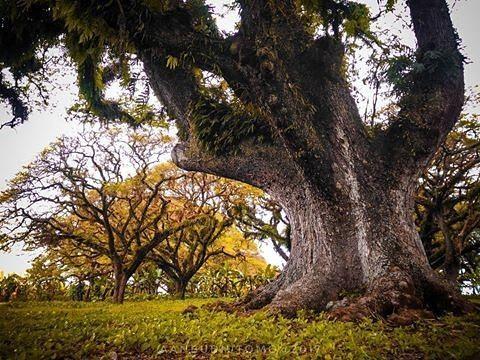 Photo@aanbudiutomo Mencari ketenangan di kota ini. Loc.TPK kunduran #blora #bloraku #infoblora #exploreblora #bloracetar #jejakblora #jelajahblora #tpk #jawatengah #infonesia #indonesia_photography #phonegraphy #photooftheday #fotografi #fotografer #lanscape #scape #trees #natgeo #beautiful #serikat_fi #instagram #instafoto #instadaily #instashot #like #likeforlike