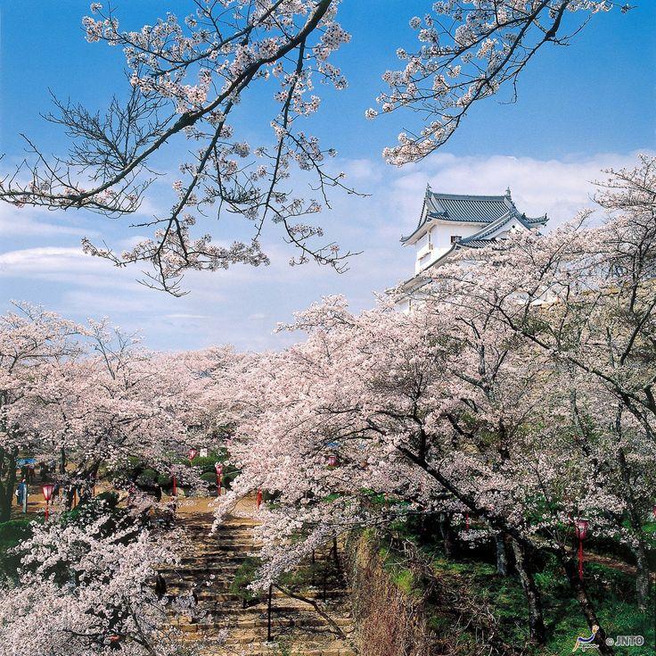 Kirschblüten in Okayama, Japan.