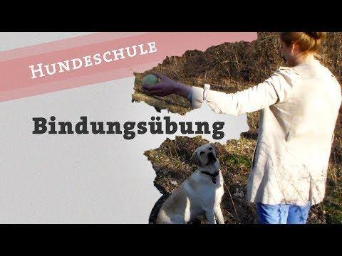 Bindungsübungen Hund Blickkontakt Aufmerksamkeit Bindung Übung + Outtake / Welpe Balljunkie - YouTube