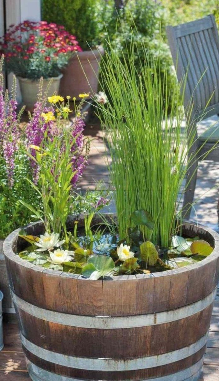 Teich Mit Schilfgr Sern In Einem Fass Gartenterrasse Garten Terrasse Whiskey Barrel Planter Beautiful Patios Barrel Planter