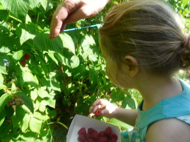 Le verger d'Anderlecht pour aller cueillir des fraises et des framboises en été
